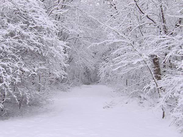 Bäume im Winter mit Schnee